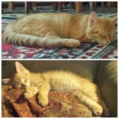 #kittens today. Ramses up top, Iliad on the bottom.