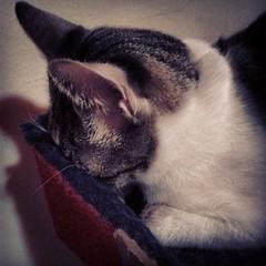 #siesta #apaguenlaluz!!!