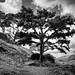 Tree, Spinalonga, Crete by Mark Candlin