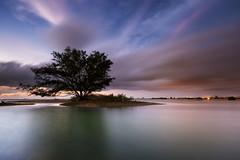 Serangan Tree