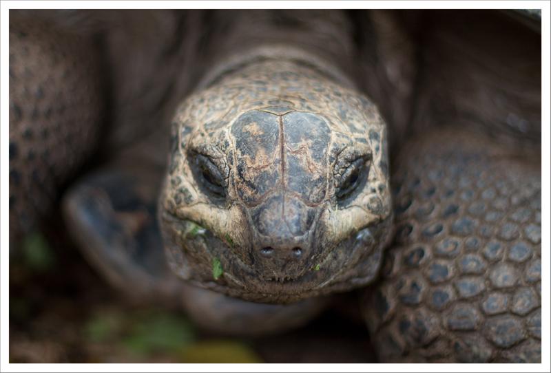 Retrato de una tortuga gigante