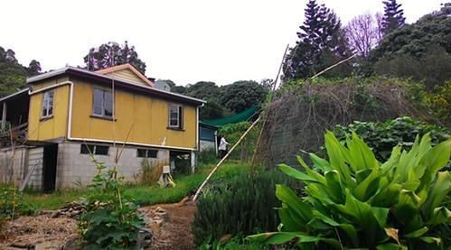 屋頂右邊的水塔,用來回收雨水,並在水塔周圍種植攀藤作物降溫。攝影:林貞妤。