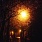 Lamp lit trees