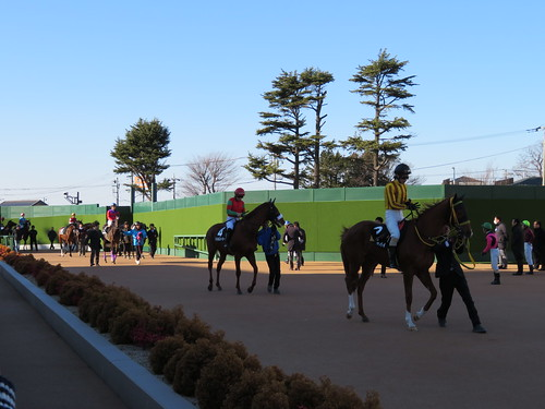 中山競馬場で馬場へ向かう馬