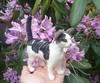 Cat Memorial / Needle Felted CAT  / Custom Pet Portrait Sculpture / Tabby Marley by GOURMET FELTED