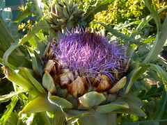 arecales(0.0), vegetable(0.0), thistle(0.0), produce(0.0), food(0.0), crop(0.0), flower(1.0), plant(1.0), artichoke(1.0), flora(1.0), artichoke thistle(1.0),