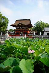 Photo:20150712 Iga Hachimangu 1 By BONGURI