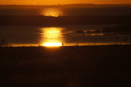 water birds silhouette golden geddal