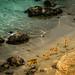 Beach Deer by atenpo