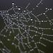 Tela de arañas y gotitas by Michael Maturana