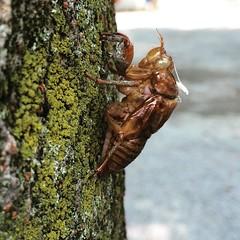 wasp(0.0), animal(1.0), invertebrate(1.0), insect(1.0), fauna(1.0), true bugs(1.0),