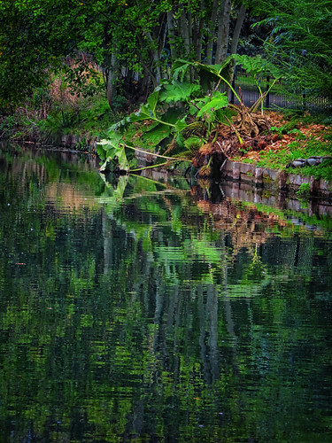 uk nature reflections colorful wells somerset palace greens bishops moat
