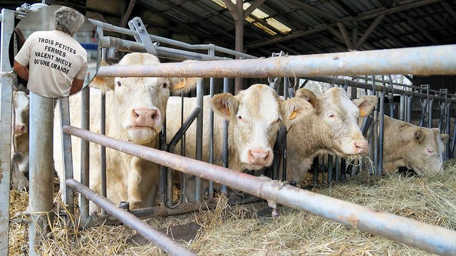 NON à la ferme-usine de 1200 taurillons à Wintershouse (67)