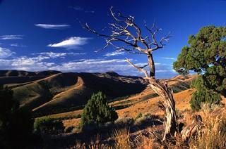 Pocatello Idaho Tree