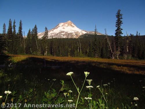 Wildflowers in Elk Meadows, Mt. Hood National Forest, Oregon