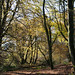 Autumn on Lewesdon Hill-3