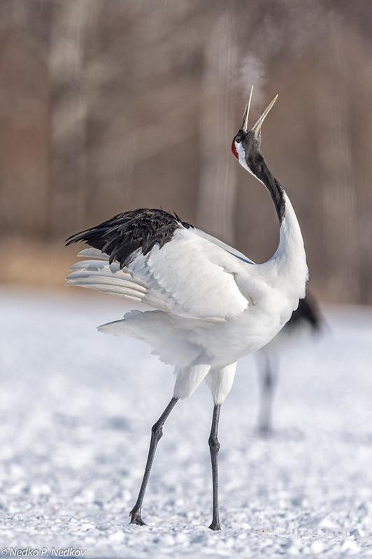Mating crane