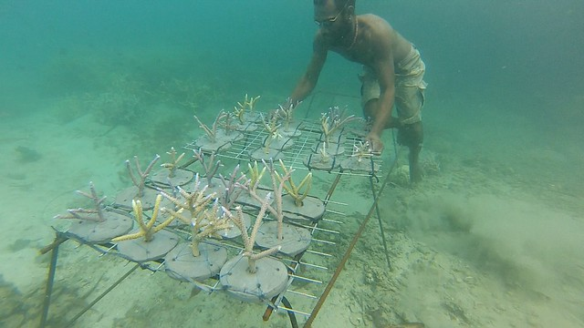 Coral cutting tying, Solomon Islands. Photo by Wade Fairley.