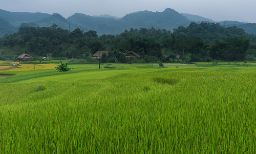green geotagged rice vietnam ricefield hagiang