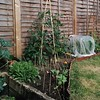 Our vegetable garden, 2. Radishes, spring onions, tomatoes and carrots (under the netting).