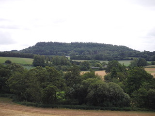 High Wood from near East Hatch
