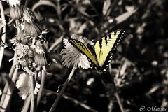 Colors on BW