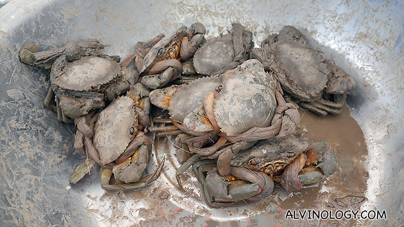 Mud crabs with the mud still on