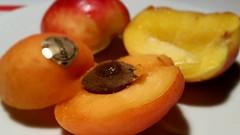 Prunus armeniaca and Prunus persica - Aprikose und…