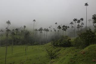 Valle de Cocora, Colombia.