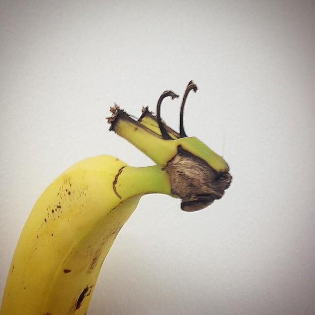 Die Hitze. Jetzt seh ich schon Giraffen, wo Bananen sein sollten.