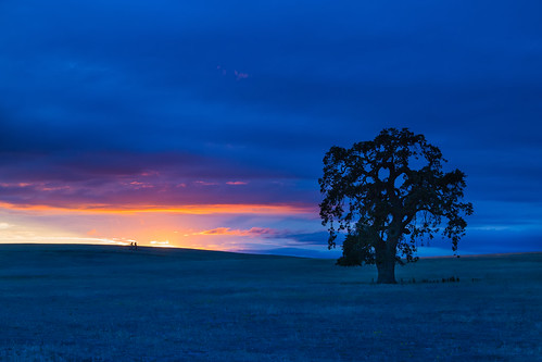 sunset field night rural cloudy oaktree sanbenitocounty renerodriguezphotography