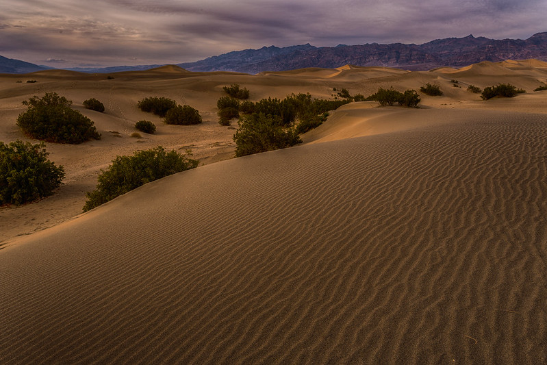 Low light at the Dunes