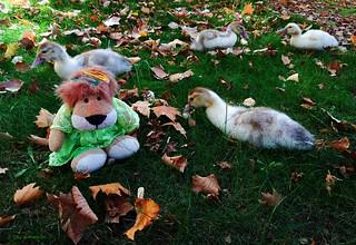 Quiero ser un pato.