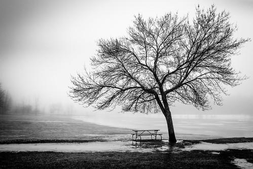 winter january tree lake beach canoneos5dmarkiv