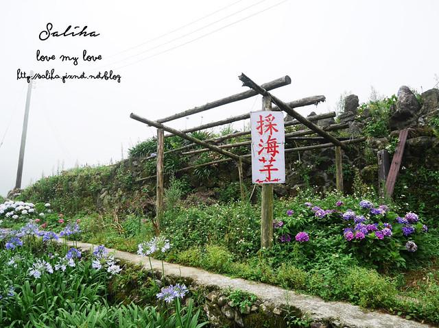 陽明山竹子湖免費繡球花愛情花