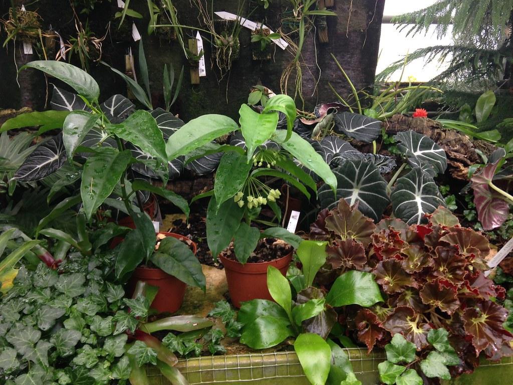 Orchidarium de Prangins 19118807370_85862bbb29_b