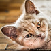 Chat, cat, 春 by Nicolas Pirson (OFF FOR A WHILE)