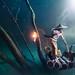 Underwater Fisherman by Von Wong
