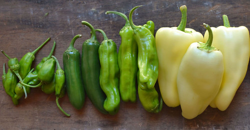 Shishito-Padron-Jalapeno-Gypsy-Peppers-All