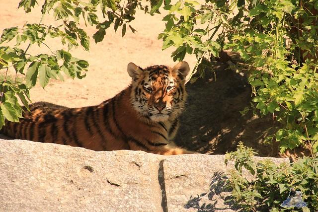 Tierpark Berlin 02.08.2015 0173