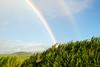 Rainbow and Sugar Cane, Maui - Hawaii by Provinciana Itinerante