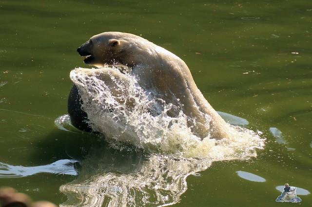 Tierpark Berlin 02.08.2015 09