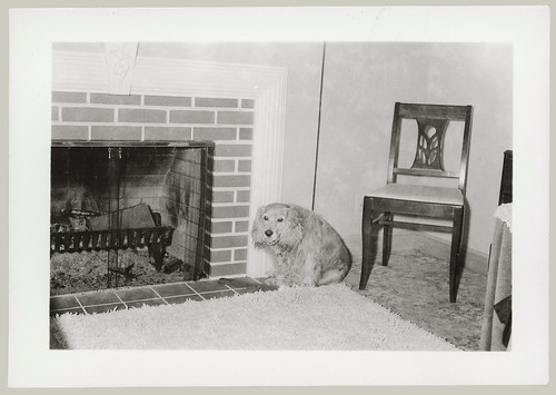 Dog and Fireplace