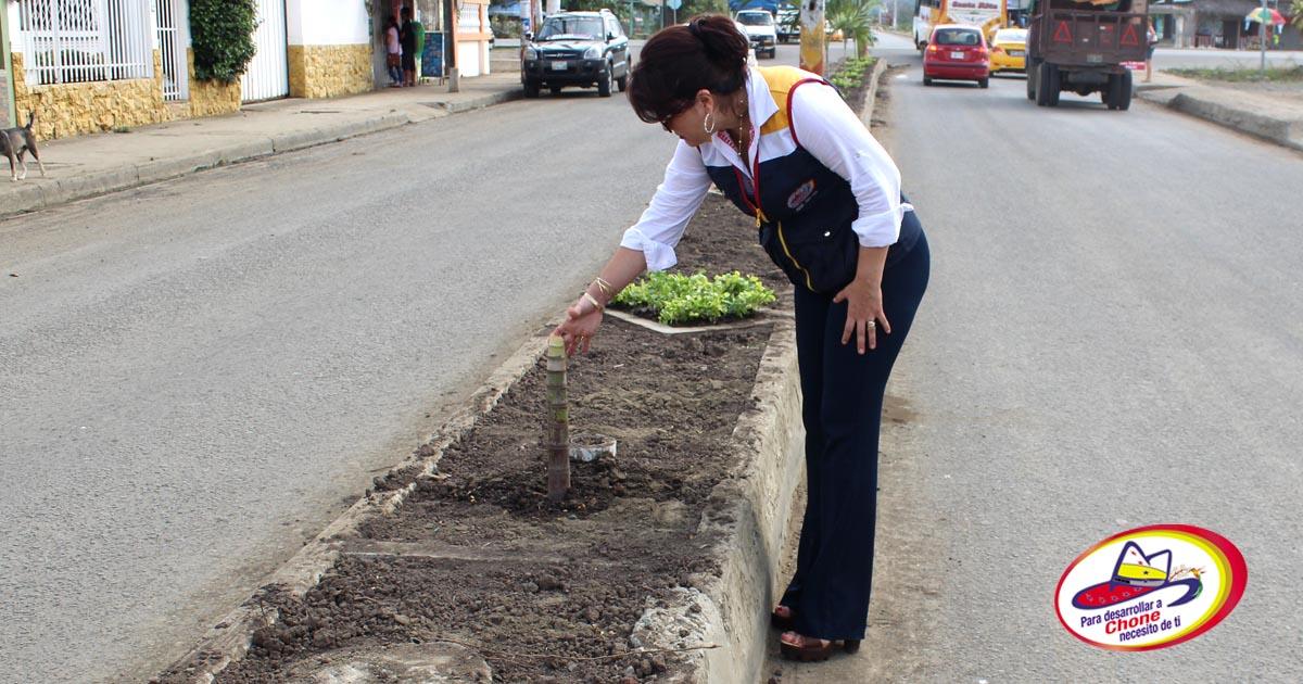 Destruyen plantas recién ubicadas en avenida Amazonas
