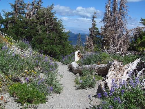 Deadwood and wildflowers on Gnarl Ridge, Mt. Hood National Forest, Oregon