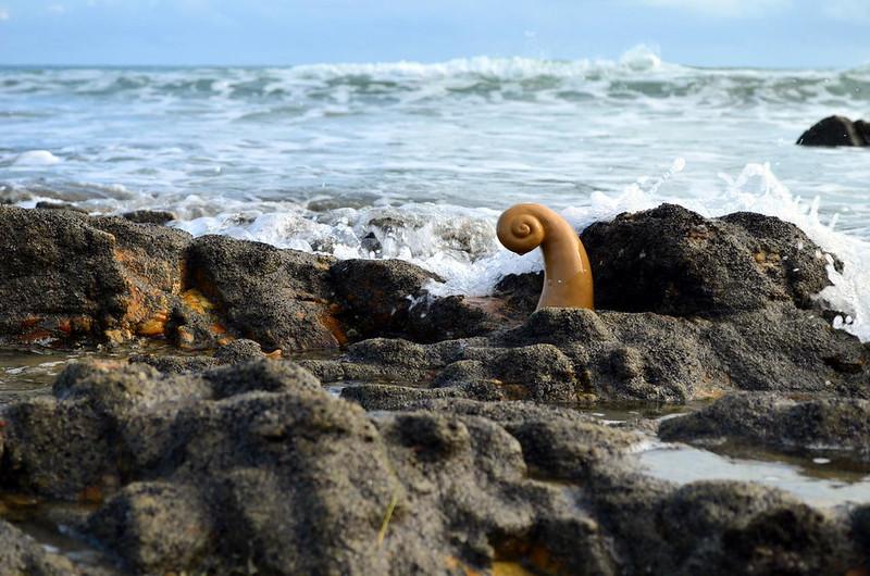 todo mundo já catou concha na praia, Jericoacoara, 2016. (2)