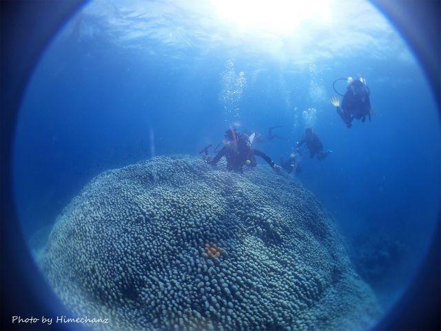 サンゴの根頭にいる熱帯魚たちにたっぷり癒やされました♪