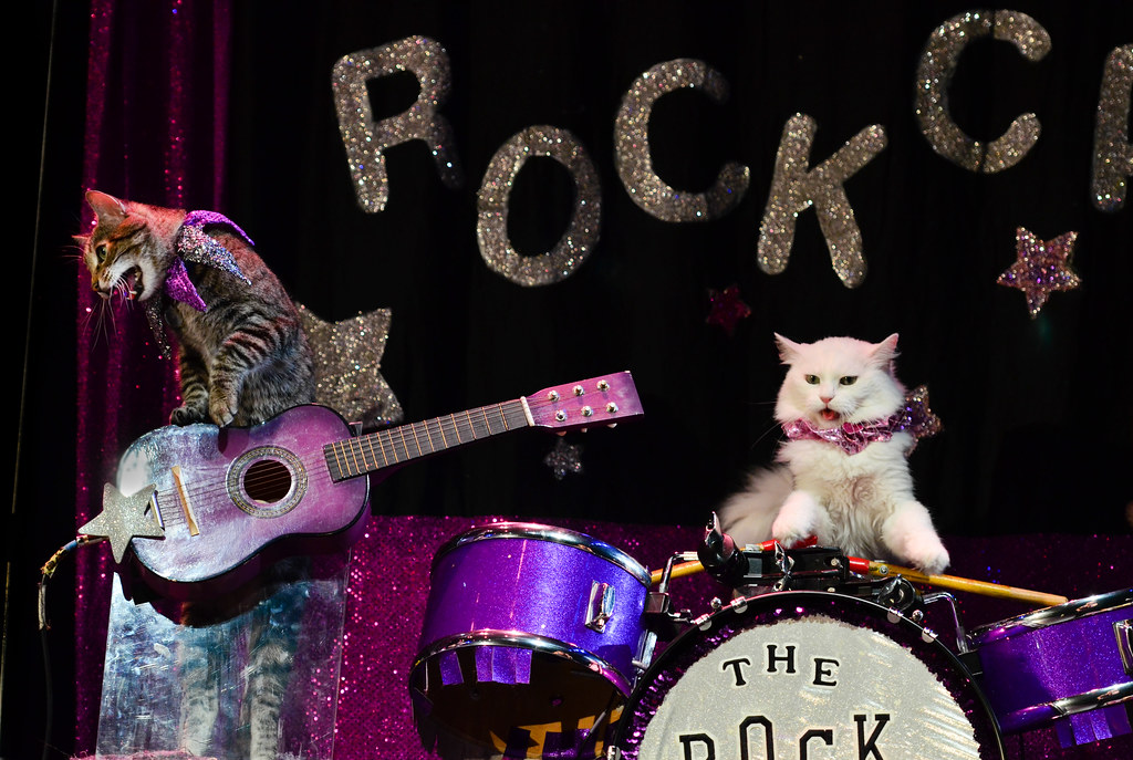 A tabby cat on guitar and a white cat on drums