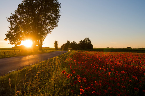 Poppy field at sunset | by Infomastern