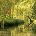 Green Reflections by maureen bracewell
